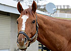 Wise Dan Rejoins Lopresti at Keeneland