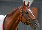 Wise Dan Gets Tightener as Return Nears