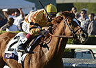 Wise Dan Recovering Well After Surgery