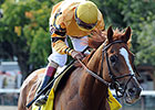 Wise Dan Preps for Shadwell Turf Mile