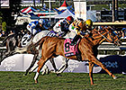 Wise Dan to Make Return in Bernard Baruch