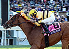 Wise Dan Again Heads Male Turf Division
