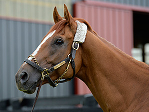 LoPresti Unfazed by Slow Move from Wise Dan