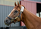 The Buzz: Wise Dan Returns Home May 21