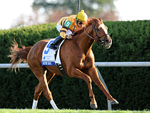 Different Paths for Wise Dan, Animal Kingdom