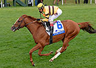 Wise Dan to Miss Breeders' Cup Mile