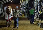 Wise Dan Walks Shedrow at Keeneland