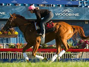 Wise Dan - Woodbine, September 14, 2013.