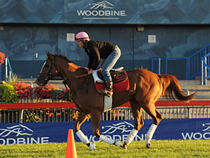 Wise Dan - Woodbine September 15, 2012.