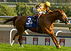 Wise Dan: Formidable on Any Surface