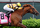 Firecracker Could be Next for Wise Dan