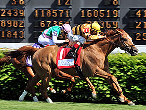 Wise Dan Undergoes Colic Surgery