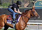 Wise Dan Stretches Legs on Santa Anita Turf