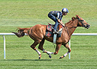 Haskin: No More 'What Ifs' With Wise Dan