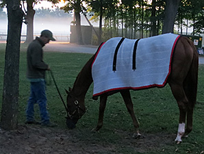 Wise Dan prior to running in the Bernard Baruch.