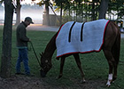 Haskin: A Day in the Life of Wise Dan