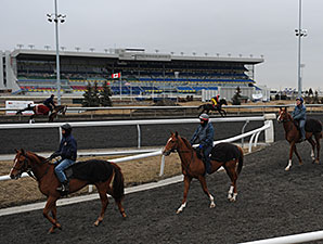 Woodbine Exercise Rider Dies in Accident