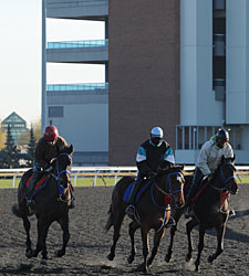 Worries Ahead as 2012 Woodbine Season Begins