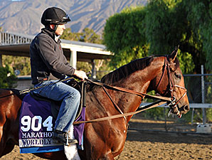 Worldly - 2013 Breeders' Cup, October 29, 2013.