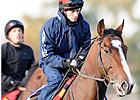 Turf Course Still Concern for Europeans