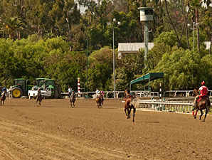 Wrong-Way Horse Voids Santa Anita Maiden Tilt
