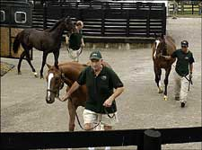 Big Supply  of Yearlings at Fasig-Tipton Kentucky Auction Will Test Demand