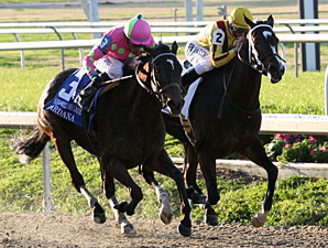 Zardana Named Fair Grounds Horse of the Meet
