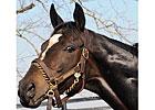 Zenyatta Loses Foal; Will Be Bred Again