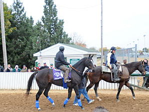 Zenyatta at Churchill Downs, November 3, 2010.