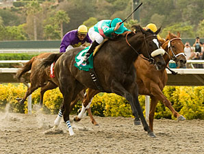 Zenyatta wins the 2010 Clement L. Hirsch.