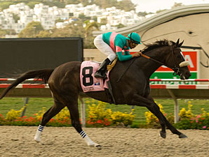 Zenyatta After 12th Straight in Hirsch Stakes