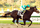 Zenyatta Stings El Encino Rivals