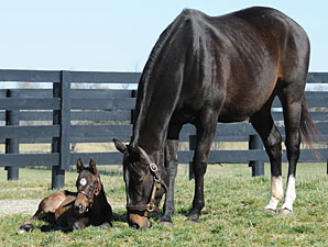Zenyatta to be Bred to Tapit in 2012