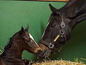 Zenyatta with her new filly by War Front.