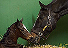 Easter Filly for Horse of the Year Zenyatta