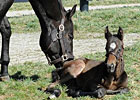 Video: Zenyatta and her Foal
