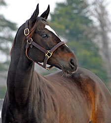 Horse of the Year Zenyatta Bred to Bernardini