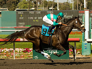 Zenyatta Would Be Favored in BC Classic