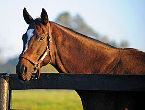Zenyatta Confirmed in Foal to War Front