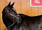 Zenyatta Appears at Keeneland Upon KY Arrival