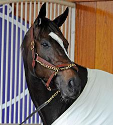 Champion Zenyatta Retired