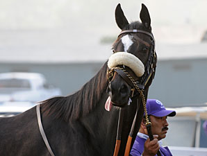 Zenyatta Back to Work at Hollywood Park