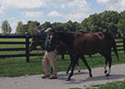 Zenyatta & 2014 War Front Foal at Lane's End