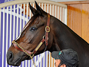 Zenyatta is in the zone, preparing for the 2010 Breeders' Cup Classic.