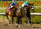 Zenyatta Remains Unbeaten in Milady &#39;Cap