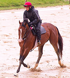 Too Wet for Jog for Derby Winner