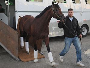 Zifzaf arrives at Woodbine on September 17, 2010.