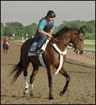 A P Valentine in Sharp Work for Belmont