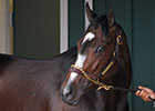 Legends: Rachel Alexandra, Filly for the Ages