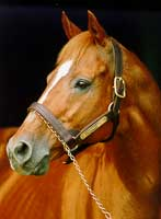 Triple Crown Winner Affirmed Euthanized